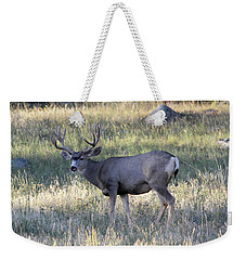 Weekender Tote Bag featuring the photograph Tasty by Shane Bechler