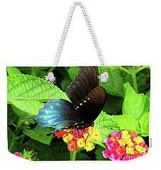 Tennessee Blue And Black Wing Butterfly Weekender Tote Bag