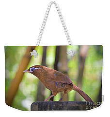 Weekender Tote Bag featuring the photograph Chinese Hwamei  Edition 2 by Judy Kay