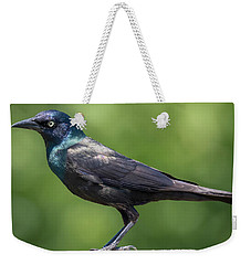 Weekender Tote Bag featuring the photograph The Beautiful Common Grackle by Ricky L Jones