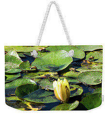 Weekender Tote Bag featuring the painting The Bees Of San Tan by Carolina Liechtenstein