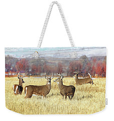 Weekender Tote Bag featuring the photograph The Bucks Stop Here White-tail Deer  by Jennie Marie Schell