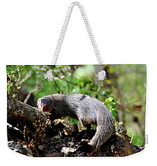 The Indian Gray Mongoose Weekender Tote Bag by Manjot Singh Sachdeva