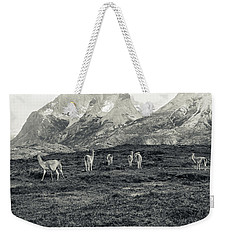 Weekender Tote Bag featuring the photograph The Lamas by Andrew Matwijec
