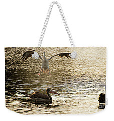 The Spot-billed Pelican Or Grey Pelican  Pelecanus Philippensis  Weekender Tote Bag