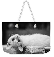 The White Kitten Weekender Tote Bag
