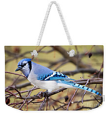The Winter Blue Jay  Weekender Tote Bag by Ricky L Jones