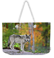 The Wolf. Weekender Tote Bag