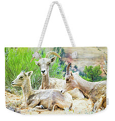 Three Big Horn Sheep Weekender Tote Bag
