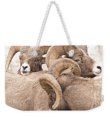 Three Bighorn Rams Weekender Tote Bag