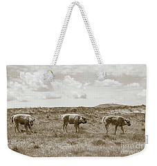 Weekender Tote Bag featuring the photograph Three Buffalo Calves by Rebecca Margraf