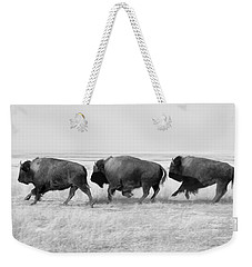 Three Buffalo In Black And White Weekender Tote Bag by Todd Klassy