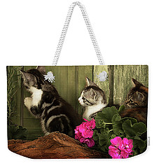Three Cute Kittens Waiting At The Door Weekender Tote Bag