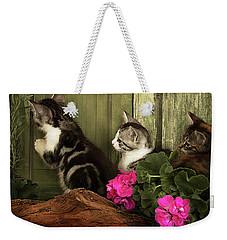 Three Cute Kittens Waiting At The Door Weekender Tote Bag