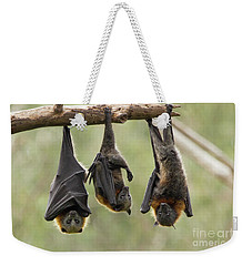 Three Flying Foxes Weekender Tote Bag