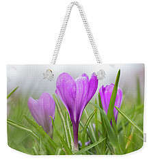 Three Glorious Spring Crocuses Weekender Tote Bag by Betty Denise