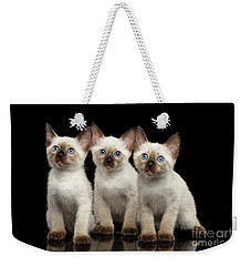 Three Kitty Of Breed Mekong Bobtail On Black Background Weekender Tote Bag