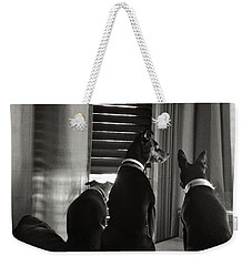 Three Min Pin Dogs Weekender Tote Bag