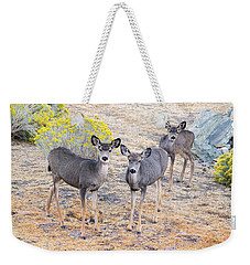 Weekender Tote Bag featuring the photograph Three Mule Deer In High Desert by Frank Wilson