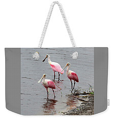 Three Roseate Spoonbills Square Weekender Tote Bag by Carol Groenen