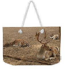 Three Deer Resting Weekender Tote Bag