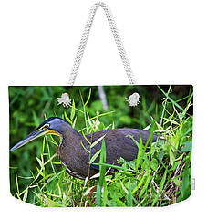 Weekender Tote Bag featuring the photograph Tiger Heron 2 by Arthur Dodd