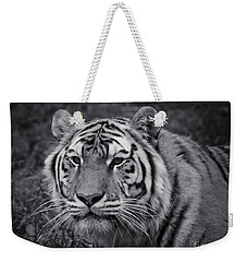 Tiger In The Grass Weekender Tote Bag by Darcy Michaelchuk