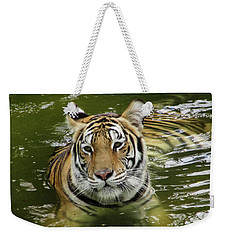 Weekender Tote Bag featuring the photograph Tiger In The Water by Pamela Walton