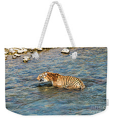 Tiger In The Water Weekender Tote Bag by Pravine Chester