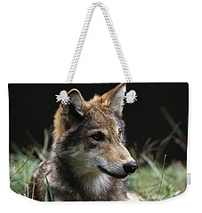 Timber Wolf Canis Lupus Portrait Weekender Tote Bag