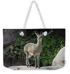 Weekender Tote Bag featuring the photograph Tip Toe On The Rock by Debby Pueschel