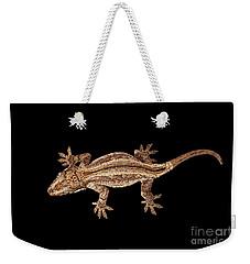 Top View Of Gargoyle Gecko, Rhacodactylus Auriculatus Staring Isolated On Black Background. Native T Weekender Tote Bag
