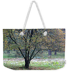 Tree In Forest With Autumn Colors Weekender Tote Bag