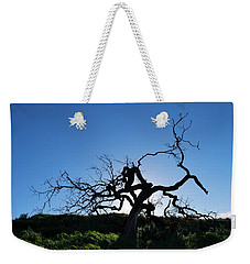 Weekender Tote Bag featuring the photograph Tree Of Light - Straight View by Matt Harang
