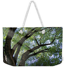 Weekender Tote Bag featuring the photograph Tree Rays by Brian Jones
