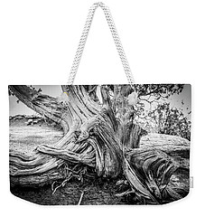 Weekender Tote Bag featuring the photograph Twisted by Marilyn Hunt