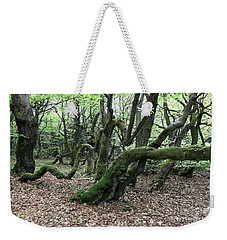 Weekender Tote Bag featuring the photograph Twisted Trunks Of Beech Trees - Old Beech Forest by Michal Boubin
