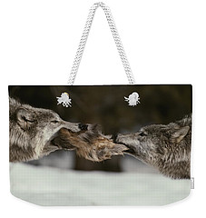 Two Gray Wolves, Canis Lupus, Tussle Weekender Tote Bag