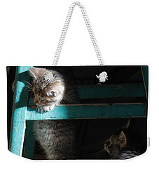Weekender Tote Bag featuring the photograph Two Kittens With Turquoise Chair by Doris Potter