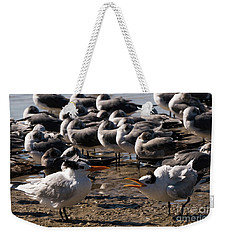 Two Royal Terns Arguing At The Beach Weekender Tote Bag