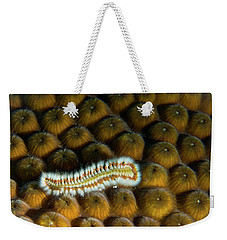 Weekender Tote Bag featuring the photograph Undulating Bristle Worm by Jean Noren