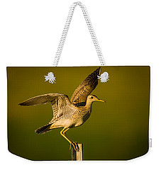 Upland Sandpiper On Steel Post Weekender Tote Bag