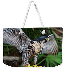 Weekender Tote Bag featuring the photograph Upset Peregrine by Arthur Dodd