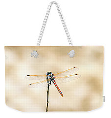 Weekender Tote Bag featuring the photograph Varigated Meadowhawk Dragonfly Sympetrum Corruptum by Frank Wilson