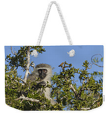 Vervet Monkey Perched In A Treetop Weekender Tote Bag