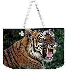 Weekender Tote Bag featuring the photograph Very Cranky Today by Elaine Malott