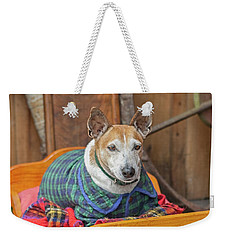 Weekender Tote Bag featuring the photograph Very Old Pet Dog In Clothes On Own Bed by Patricia Hofmeester