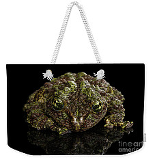 Vietnamese Mossy Frog, Theloderma Corticale Or Tonkin Bug-eyed Frog, Isolated On Black Background Weekender Tote Bag