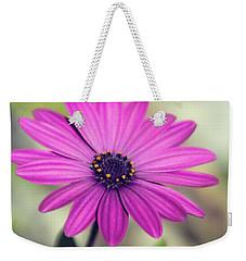 Weekender Tote Bag featuring the photograph Vintage Purple Daisy  by Saija Lehtonen