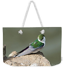 Violet-green Swallow Weekender Tote Bag by Mike Dawson